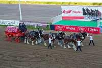 Легендарные лошади Clydesdales теперь в России