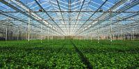 Как круглый год выращивать свой собственный хмель в специальной гидропонной теплице